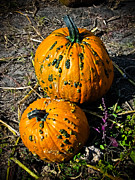 Patch Posters - Two Pumpkins Poster by Colleen Kammerer