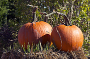 Orange Pumpkins Prints - Two Pumpkins Print by Sharon  Talson
