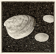 Nancy Dempsey - Two Sand Dollars for One...