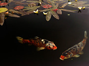 Lawrence Costales - Two Spotted Koi