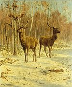 Winter Prints Painting Posters - Two Stags in a Clearing in Winter Poster by Rosa Bonheur
