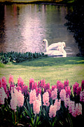 Pink Flowers. Posters - Two Swans Poster by Jasna Buncic