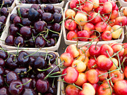 Farm Stand Art - Two Tone Cherries by Susan Colby