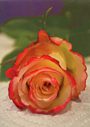 Sandi Oreilly Art - Two Tone Rose by Sandi OReilly