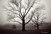 Dave Gordon Framed Prints - Two Trees Framed Print by Dave Gordon