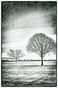 Lenny Carter Posters - Two Trees in a field Poster by Lenny Carter