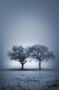 Two Trees In Blue Fog Print by Lee Avison