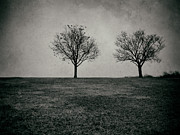 Mark Miller - Two Trees