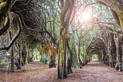 Entangled Photos - Two Tunnels Taxus by Semmick Photo