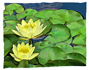 Lily Digital Art Originals - Two Water Lillies by Harold Bonacquist