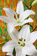 White Photo Posters - Two white lilies Poster by Garry Gay