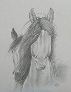 Wildlife Drawings Drawings Prints - Two Wild Horses Print by Joette Snyder
