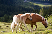 Young Horses Photos - Two wild horses by Matteo Colombo