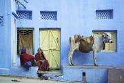 Front Porches Framed Prints - Two Women And A Cow Sitting Outside Of Framed Print by Alan Williams