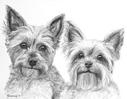 Yorkie Drawings - Two Yorkshire Terriers in Charcoal by Kate Sumners