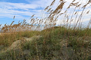 Sea Oats Framed Prints - Tybee Island Dune Framed Print by Carol Groenen