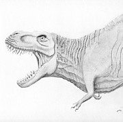 T Rex Drawings - Tyrant King by Craig Shipman