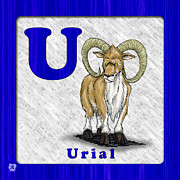 Abc Drawings - U for Urial by Jason Meents