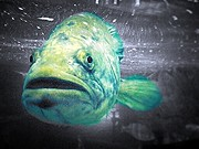 Lee Farley - Ugly grouper