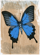 Deceptive Mixed Media Posters - Ulysses Papilio with Screw Poster by Clare Winslow