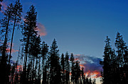 Nick  Boren - Umpqua Forest Sunset