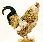 Watercolor  Pyrography - Uncle Tom the Rooster by Cate McCauley