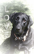 Black Lab Digital Art - Unconditional LOVE by Anita Hubbard