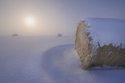 Snow Drifts Photos - Under a blanket of snow by Dan Jurak