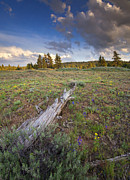 Larkspur Photos - Under Stormy Skies by Mike  Dawson
