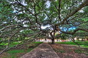 A.m Photos - Under the Century Tree by David Morefield