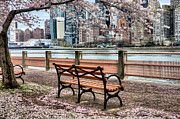 New York City Skyline Framed Prints - Under the Cherry Tree Framed Print by JC Findley