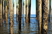 Wood Pylons Photos - Under the dock by Carla Sabatino