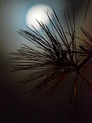 Under The Moon II Print by Maria Urso