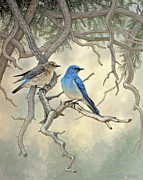 Under The Old Juniper-mountain Bluebirds Print by Paul Krapf