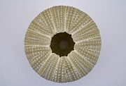 Mary Deal - Under the Sea Urchin
