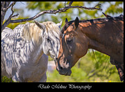 Horses Prints - Under the shade Print by Dado Molina