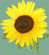 Patricia Keller Framed Prints - Under The Sunflowers Spell Framed Print by Patricia Keller