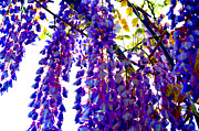 Under The Wisteria Print by Alys Caviness-Gober
