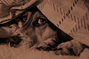 Paul Wash Art - Undercover Hound by Paul Wash