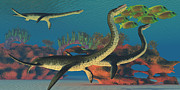 Corey Ford Framed Prints - Undersea Plesiosaurus Framed Print by Corey Ford
