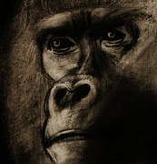 Gorilla Drawings - Understanding by Michael Cross