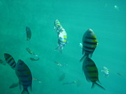 Long Photos - Underwater - Long Boat Tour - Phi Phi Island - 011317 by DC Photographer