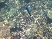 Snorkeling Photos - Underwater - Long Boat Tour - Phi Phi Island - 011329 by DC Photographer