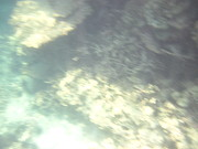 Snorkel Art - Underwater - Long Boat Tour - Phi Phi Island - 011382 by DC Photographer