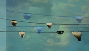 Underwear Photos - Underwear on a washing line  by Jasna Buncic