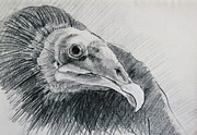 Vulture Drawings Metal Prints - Unexpected Model Metal Print by Rory Sagner