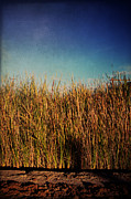Cattails Framed Prints - Unexpected Things Framed Print by Laurie Search