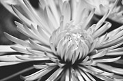 Artist and Photographer Laura Wrede - Unfolding