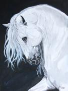 Arabian Horse Paintings - Ungido IV by Janina  Suuronen