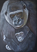 Primate Drawings - UNITED - Western Lowland Gorillas by Jill Parry